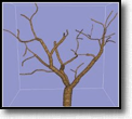Modeling Complex Unfoliaged Trees from a Sparse Set of Image